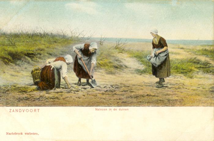 Vrouwen die dingen verzamelen in de duinen bij de zee. Ik vraag me af wat ze precies verzamelden! Tegenwoordig zijn de duinen rondom Zandvoort nog steeds toegankelijk via een speciale ingang en er zijn veel dieren en planten aanwezig. Het meest bekende duingebied zijn de Kennemerduinen. Er is een bezoekerscentrum waar u alles te weten kunt komen over de duinen