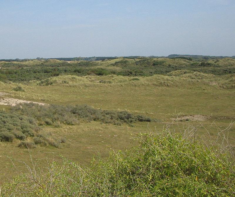 Dunes similar to when Zandvoort was known as Sandevoerde